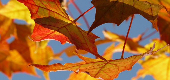 Autumn Leaves: een mooie herfst live-wallpaper