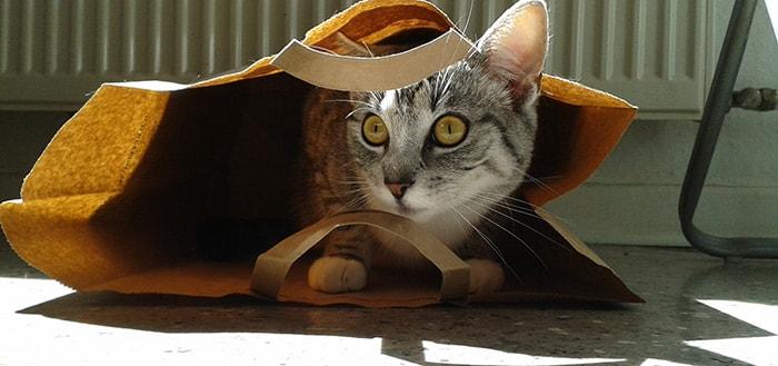Cats!: een vermakende app vol katten GIFjes