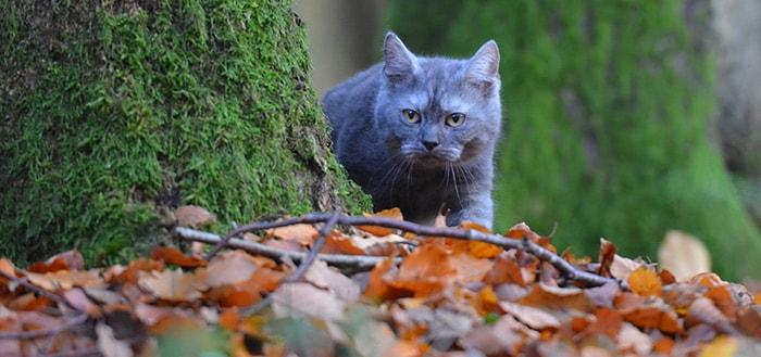 Weenect Pack Cats: een uitgebreide wearable voor je kat