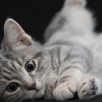 Dierendag: 7 apps voor je huisdier en dierenliefhebbers