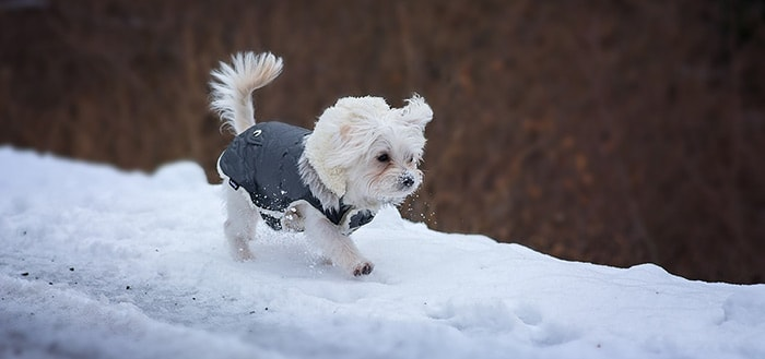 Weather Puppy: leuke weer-app met… puppies