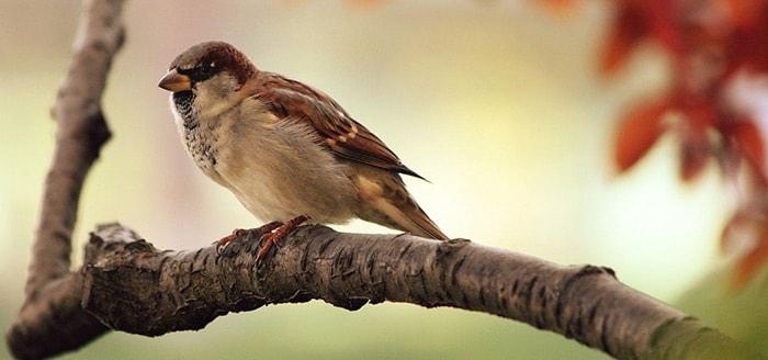 Nationale Tuinvogeltelling: doe mee via de Vogelbescherming app
