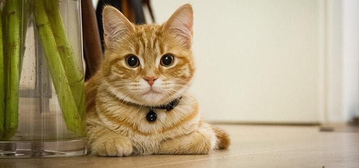 Cat Simulator: een beestachtige, vermakende simulatie-game met katten