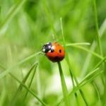 Nationale Natuur Quiz 2016: wat weet jij van de natuur?