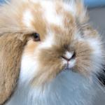 Konijnen app bevat alle informatie voor konijnen-eigenaren