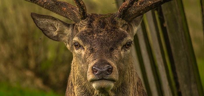 Staatsbosbeheer lanceert 'Perfect Earth Animals' app en laat kinderen de natuur ontdekken