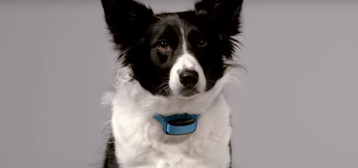 Garmin introduceert Delta Smart activiteitstracker voor honden met handige app