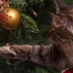 Met deze app kan je via je smartphone je eigen kerstboom optuigen