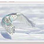 Honor 6A met Android Nougat te koop in Nederland voor 169 euro