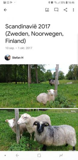 Google Foto's 4.0 album