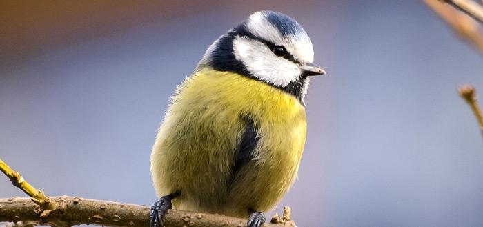 Tuinvogeltelling 2019: tellen en informatie krijgen via app