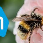 Albert Heijn Insecten app toont belang kleine diertjes