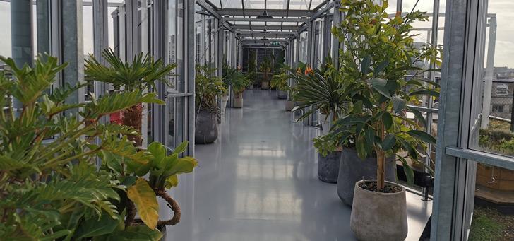 Intratuin app: tips voor de verzorging van planten en meer