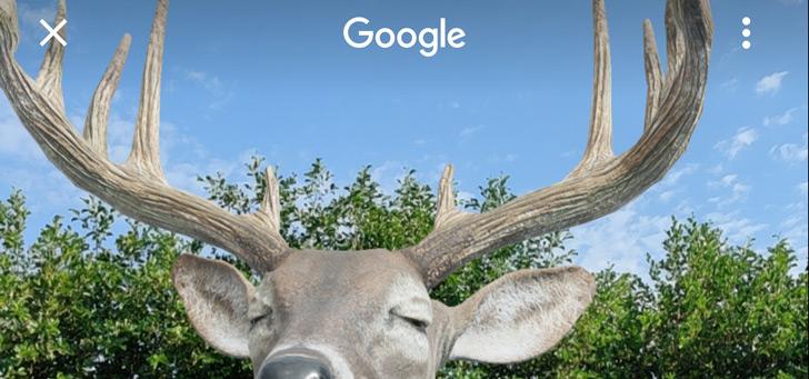 Google AR: 30+ nieuwe (huis)dieren zoals kat en konijn voor in je kamer