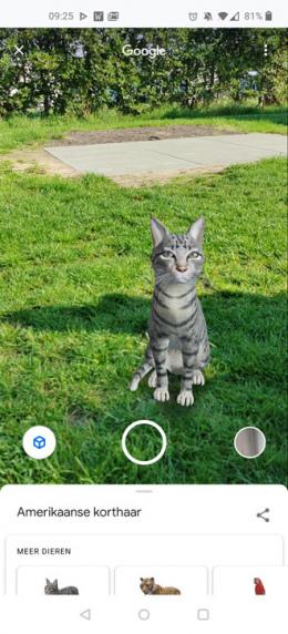 Google AR huisdieren