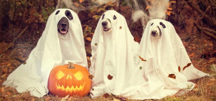 Google breidt augmented reality uit met 3D Halloween-figuren voor in je huis