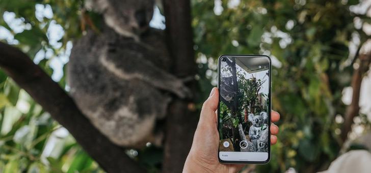 Google's nieuwe AR-dieren komen uit Australië: nu in je eigen huis